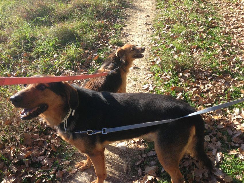 L amico fedele adozioni del cuore cani canile di